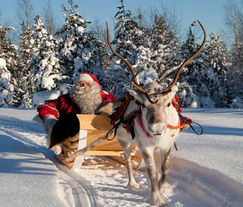 Новогодняя экскурсия на ферму пятнистых оленей